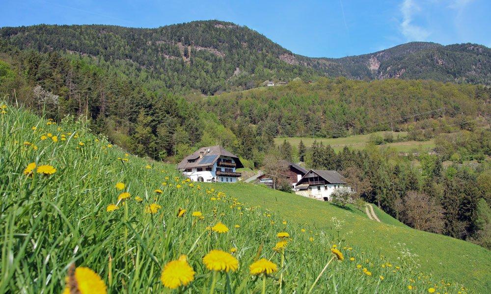 Sommerurlaub auf dem Pirchnerhof am Ritten